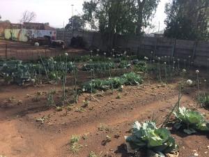 Agriulture5